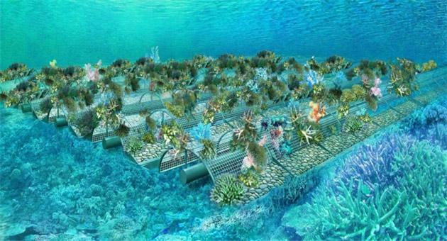サンゴ増殖棚イメージ図